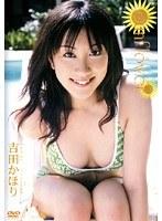 Sunflower ひまわり 吉田かほり