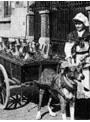 動物活用史 資料映像