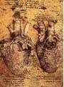 心臓と循環 資料映像