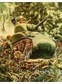 サイパン島戦 カラー記録