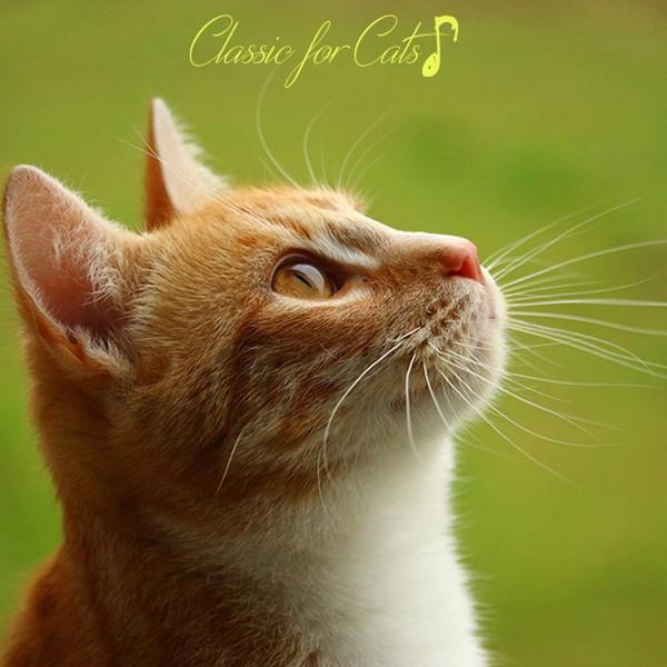 プラチナムベスト 猫(ニャン)ちゃんの好きなクラシック(UHQCD)