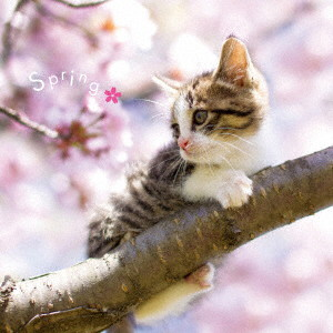 まるごと!春-Spring-