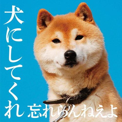 忘れらんねえよ/犬にしてくれ(初回限定盤)(DVD付)