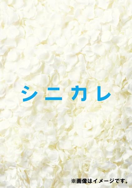 シニカレ 完全版 DVD-BOX