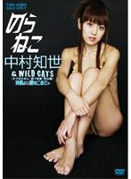 のらねこ 中村知世 & WILD CATS 沖縄より愛をこめて