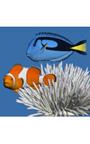 珊瑚礁の魚 デスクトップ