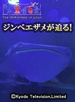 【VR】ジンベエザメが迫る! 日本驚嘆百景