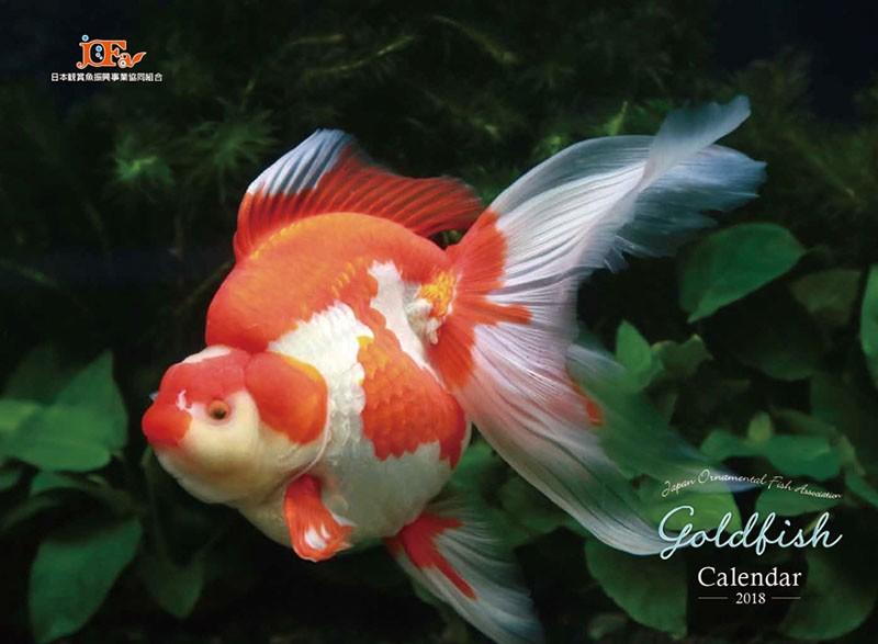 GOLD FISH 2018年カレンダー