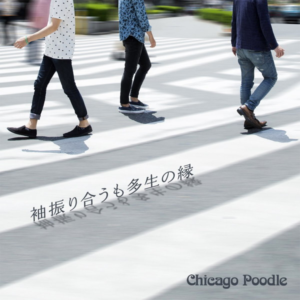 Chicago Poodle/袖振り合うも多生の縁