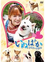 映画「いぬばか」ナビゲートDVD【渡辺美奈代出演のドラマ・DVD】