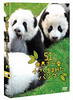 長谷川潤出演:51(ウーイー)世界で一番小さく生まれたパンダ