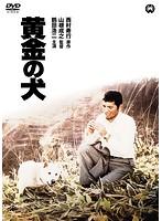 島田陽子出演:黄金の犬