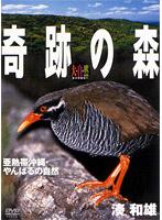大自然ライブラリー 奇跡の森~亜熱帯沖縄・やんばるの自然~湊和雄