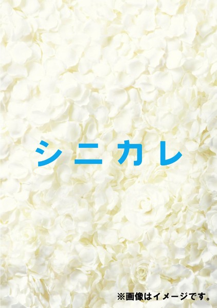 シニカレ 完全版 ブルーレイBOX (ブルーレイディスク)