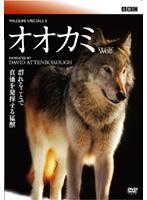 BBC ワイルドライフ・スペシャル2 オオカミ