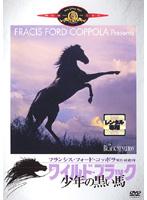 ワイルド ブラック/少年の黒い馬