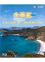 小笠原[超楽園]-TROPICAL PARADISE- (ブルーレイディスク)