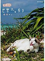 岩合光昭の世界ネコ歩き 沖縄