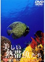 美しい熱帯魚たち トロピカルフィッシュ VOL.1