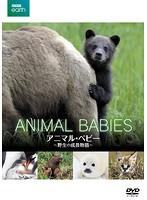 BBC EARTH アニマル・ベビー ~野生の成長物語~