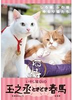 いやし猫DVD 猫侍 玉之丞ときどき春馬