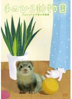 手のひら動物園 3 フェレットと子猫と仲間達