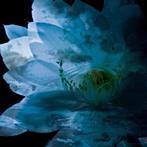 LUNA SEA MEMORIAL COVER ALBUM-Re:birth-(アルバム)
